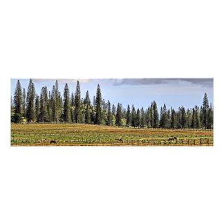 Eine Lanai Ranch panoramisch Photographischer Druck