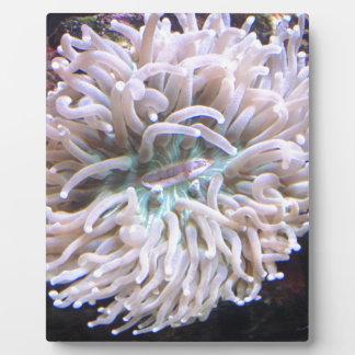 Eine lange Tentakel-Platten-Koralle Fotoplatte