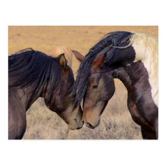 Eine Liebe der Pferde Postkarte