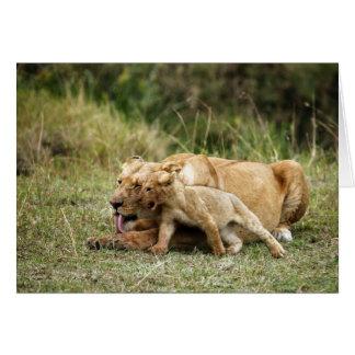 Eine Löwin und ihr spielerisches Junges Karte