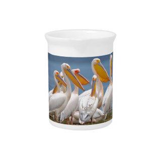 Eine Menge der Pelikane Getränke Pitcher