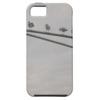 Eine Menge der Seemöwen iPhone 5 Cover