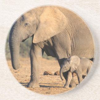 Eine Mutter und ein Kalb des afrikanischen Sandstein Untersetzer