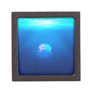 Eine Qualle Schachtel