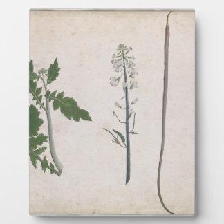 Eine Rettich-Pflanze, ein Samen und eine Blume Fotoplatte
