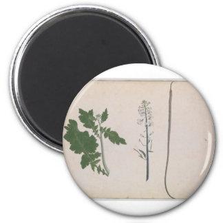 Eine Rettich-Pflanze, ein Samen und eine Blume Runder Magnet 5,1 Cm