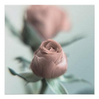 Eine rosa Rose für Ihren Schatz… Poster