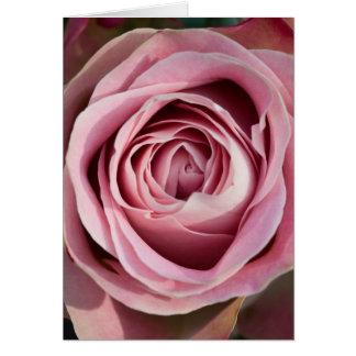 Eine Rosen-Karte Karte