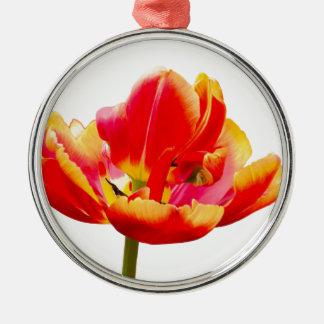Eine rote Tulpe-Blume auf weißem Hintergrund Silbernes Ornament