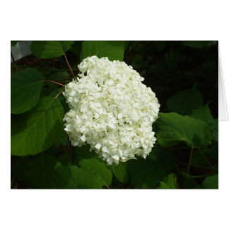 Eine Schneeball-Blüte Karte