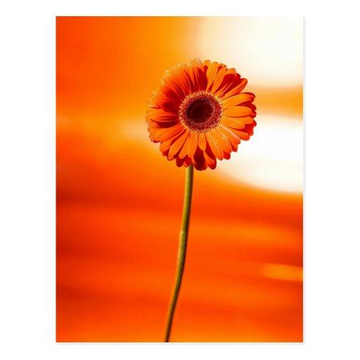 Eine schöne Blume im Sommer Postkarten