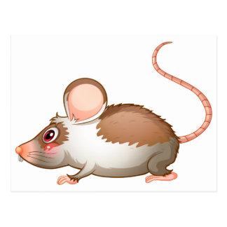 Eine Seitenansicht einer Ratte Postkarte