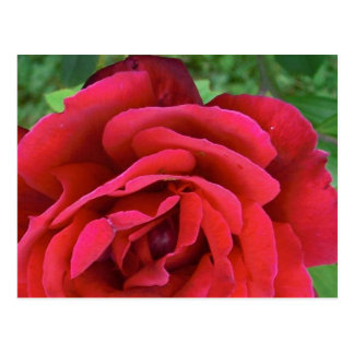 Eine Single-Rote Rose Postkarte