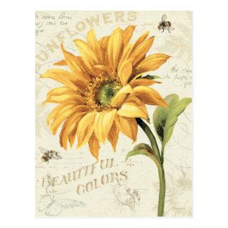 Eine Sonnenblume in voller Blüte Postkarte