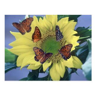 Eine Sonnenblume mit einigen Schmetterlingen Postkarte