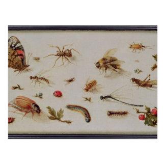 Eine Studie der Insekten Postkarte