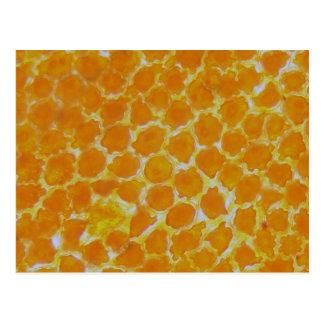 Eine tagetes Blume unter dem Mikroskop Postkarten