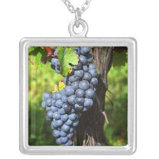 Eine Weintraube reifen Merlot auf einer Rebe mit Versilberte Kette