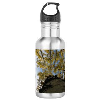 Einen aspen-Stamm oben schauen Trinkflaschen