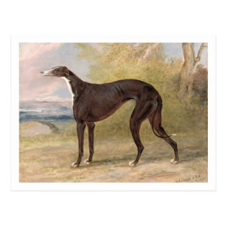 Einer von gewinnenden Windhunden George-Wegfoxs: Postkarte