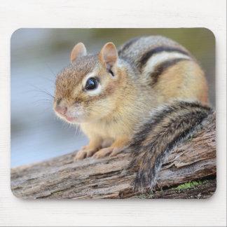 Einfach entzückender kleiner Chipmunk Mauspads