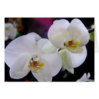 Einfach Orchideen Karte