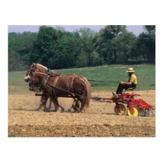 Einfache Leute des amischen Landes bei der Landwir Postkarte