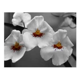 Einfarbige Orchideen Postkarte
