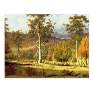 Eingeborene im Eukalyptus-Wald auf Mühlebenen, PA Postkarte