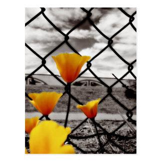 Eingeschlossen hinter Zäunen und unter drastischen Postkarte