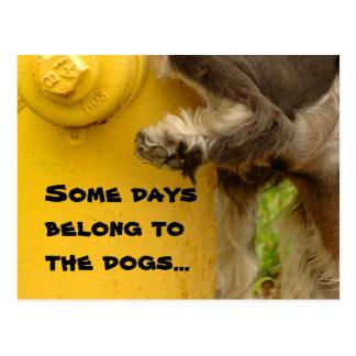 Einige Tage gehören den Hunden… Postkarte