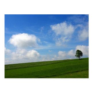Einsamer Baum - Postkarte