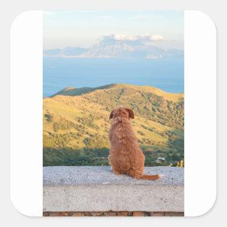 Einsamer Hund, der auf Gibraltar-Straße aufpasst Quadratischer Aufkleber