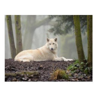 Einsamer Wolf Postkarte