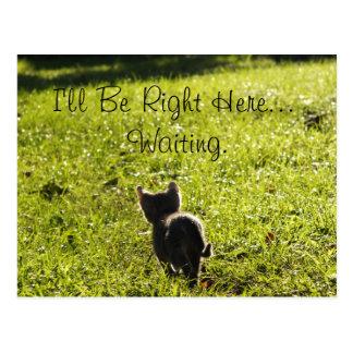 """Einsames Kätzchen """"vermisst Sie"""" Postkarte"""