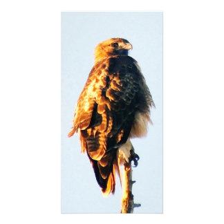 Einzigartige Rot-Angebundene Falke-kundenspezifisc Foto Grußkarte