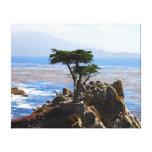 Einzige Zypresse, Monterey, Kalifornien Gespannter Galeriedruck