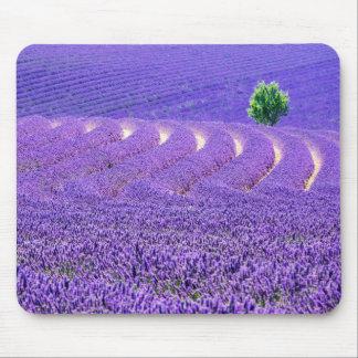 Einziger Baum auf dem Lavendel-Gebiet, Frankreich Mauspad