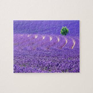 Einziger Baum auf dem Lavendel-Gebiet, Frankreich Puzzle
