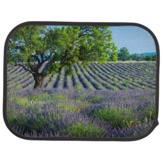 Einziger Baum auf dem lila Gebiet des Lavendels Automatte