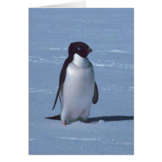 Einziger Pinguin im Schnee im Schnee Karte
