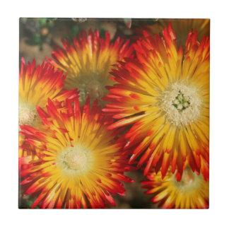 Eis-Pflanzen (Lampranthus goldfarbig) in der Blüte Keramikfliese