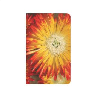 Eis-Pflanzen (Lampranthus goldfarbig) in der Blüte Taschennotizbuch