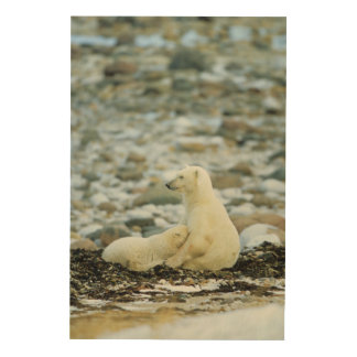 Eisbär CUB mit Mutter Holzleinwand