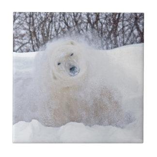 Eisbär, der Schnee weg auf gefrorener Tundra Keramikfliese
