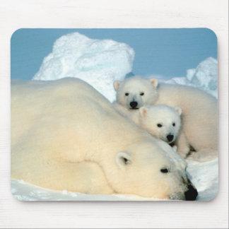 Eisbär-Familie Mauspad