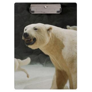 Eisbär-Grinsen