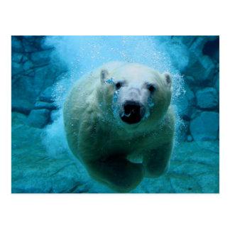 Eisbär im Wasser Postkarte