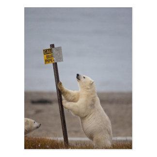 Eisbär lehnt sich auf Zeichen für begrabenes Rohr Postkarten