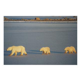 Eisbär mit zwei CUB Holzleinwand